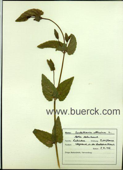 herbarium 536 antiquarische b cher gefunden bei. Black Bedroom Furniture Sets. Home Design Ideas