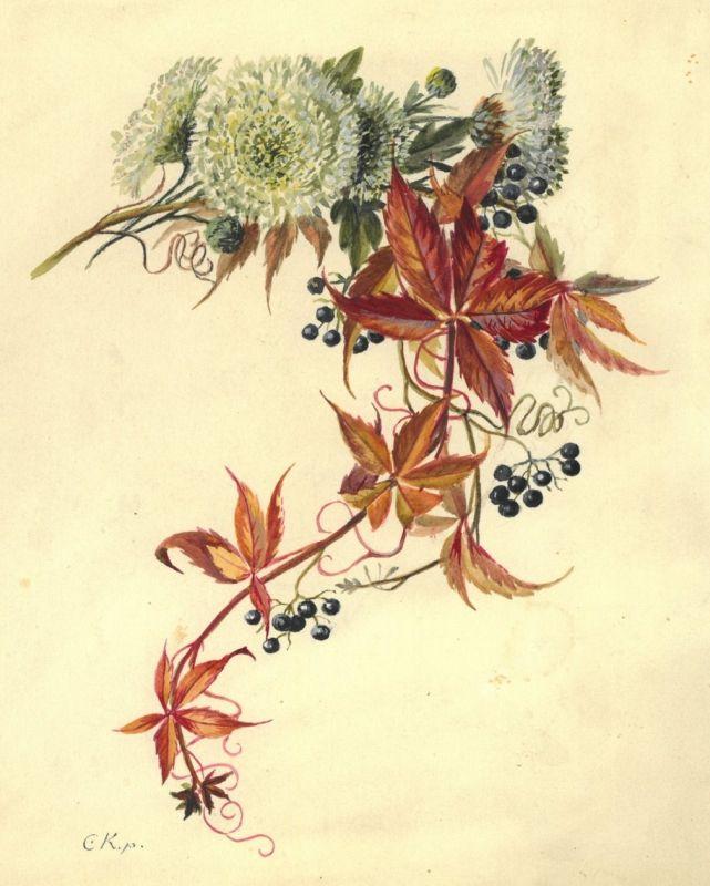 Schwarze Tapete Mit Wei?en Blumen : Schwarze Beeren an einer Ranke mit herbstlich gef?rbten Weinbl?ttern